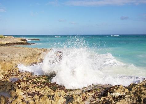Wave Six