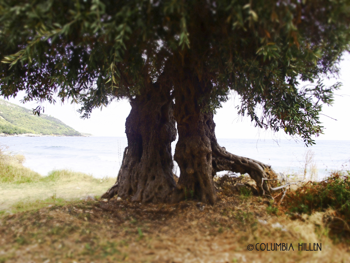 landscape photography, trees joined beside the sea