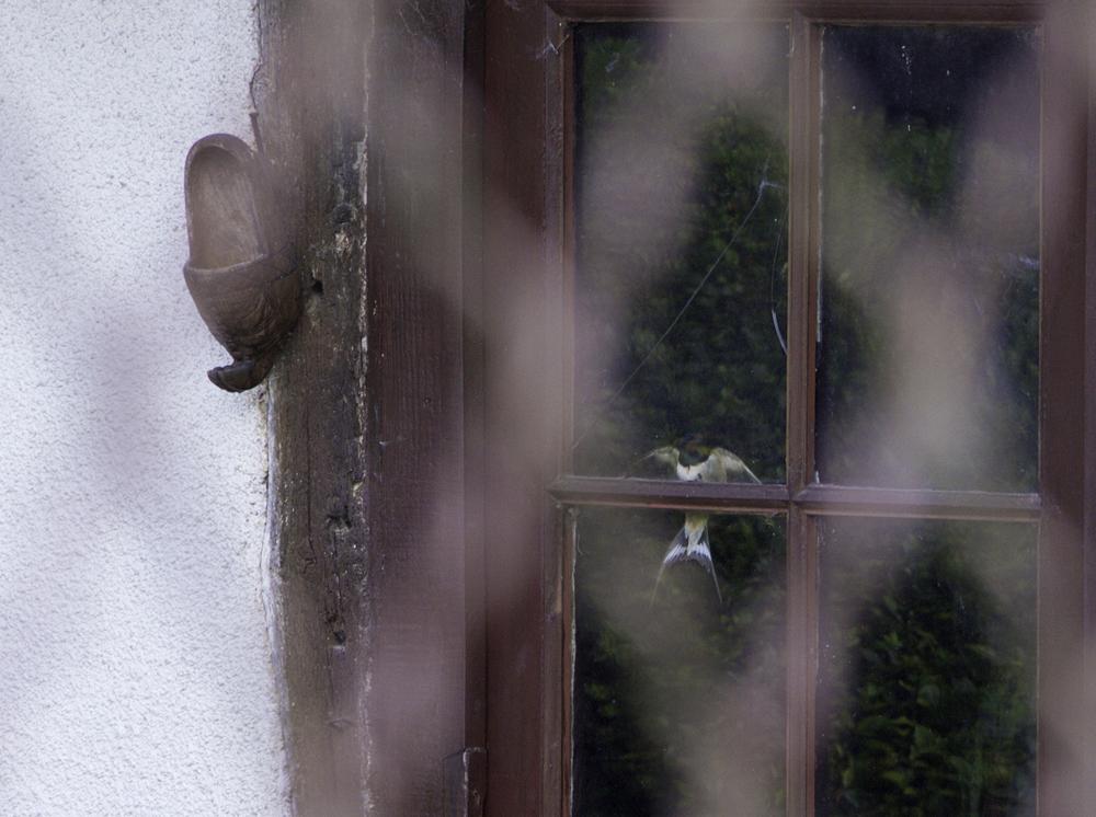 street photography, bird in captivity
