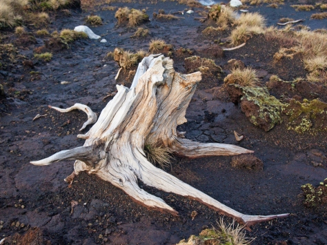 old tree root, landcape photography, memories of places