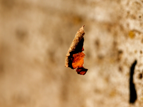 abstract photography, columbia hilen photography, Irish photographers